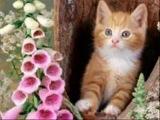 Детские песни Кошка беспородная